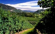 The Strada del Prosecco